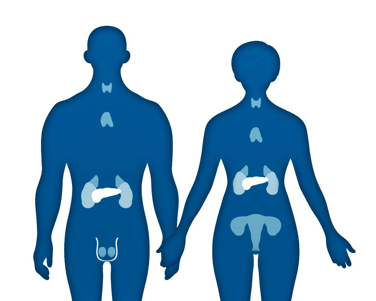 Влияние соединения на эндокринную систему