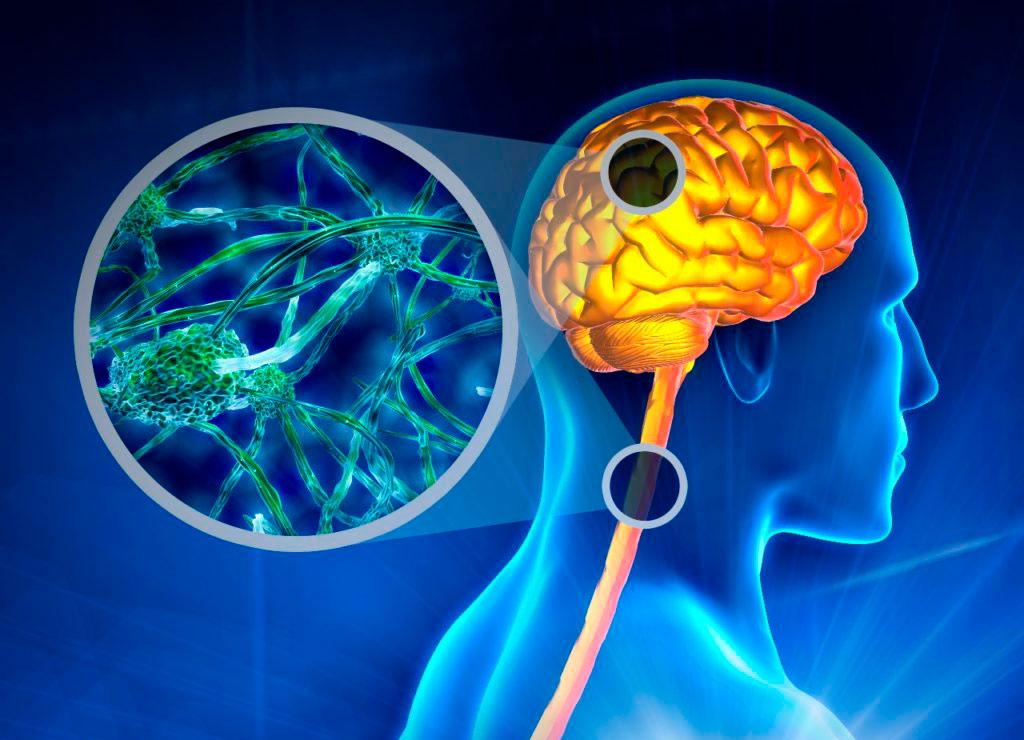 Витамин B7 при склерозе